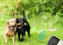 Best Dog Shock Collar – Controversial Yet Effective Dog Training