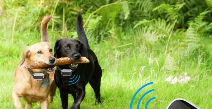 Best Dog Shock Collar – Controversial Yet Effective Dog Training