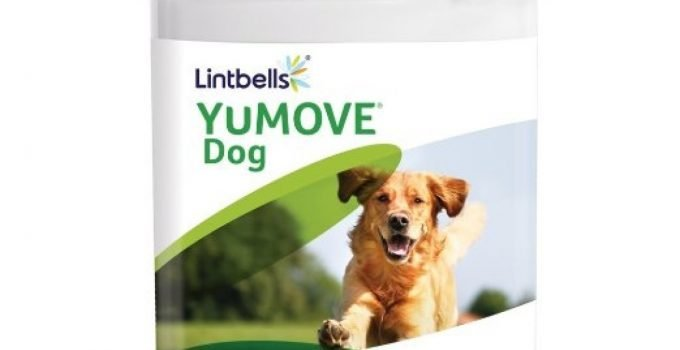 Lintbells YuMove Tablets Reviews: Why are Joint Supplements Important?