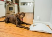 Best Automatic Timed Dog Feeders for a Much Healthier Dog 2019 2