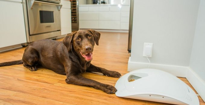 Best Automatic Timed Dog Feeders for a Much Healthier Dog