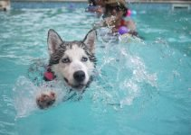 Best 5 Paddling Pools for Dogs – Outside Fun in the Sun for your Dog 13