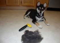 Best DeShedding Tool: FURminator DeShedding Tool Review 2020