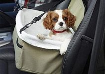 How Can I Solve Dog Anxiety In The Car? These Tips Might Help... 2