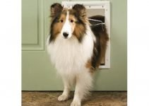10 Automatic Dog Door and Dog Flaps Perfect Dog Safety