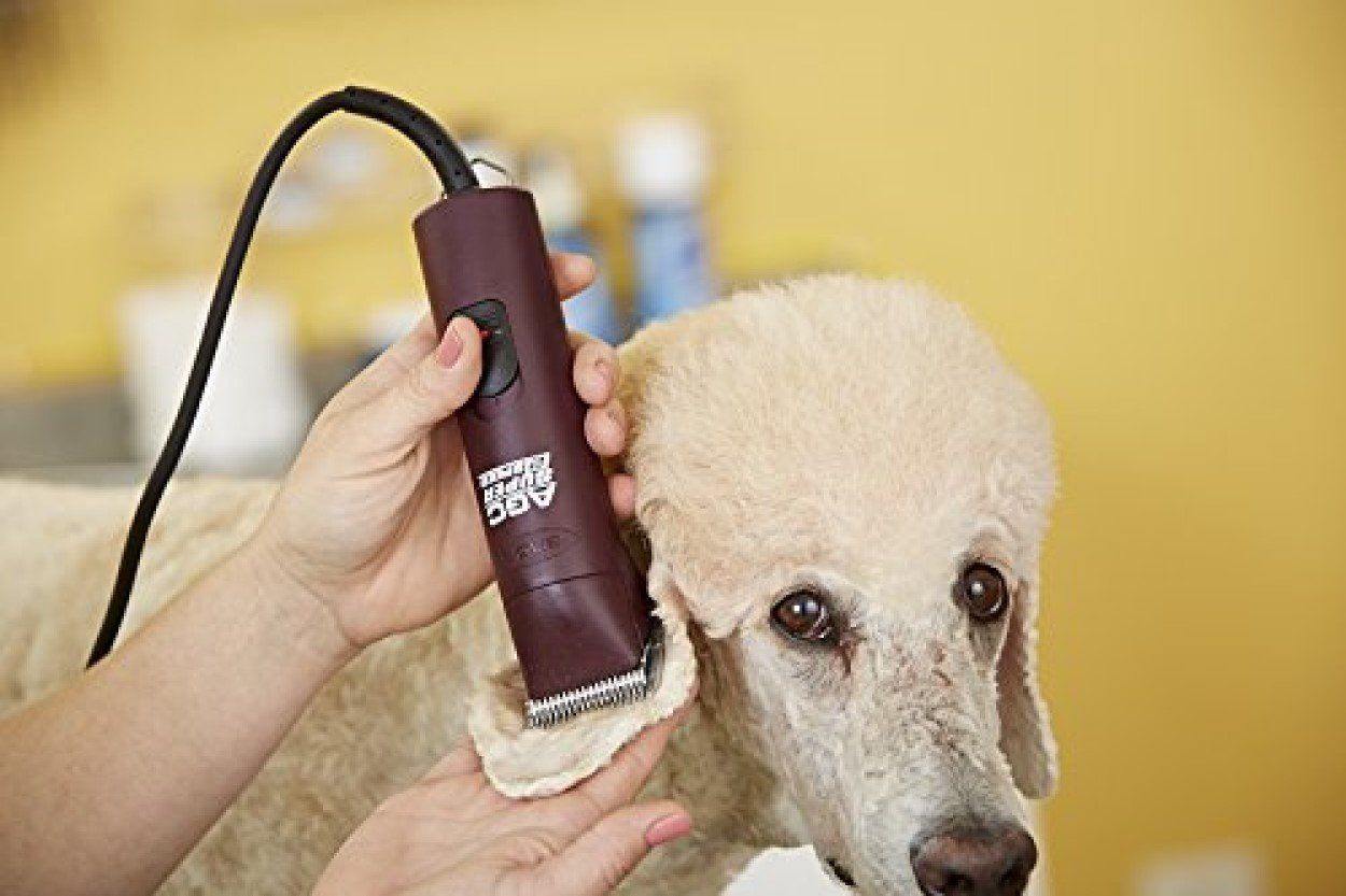 Wow The Best Professional Dog Clippers 2020 Groom Your Dog Like A Pro