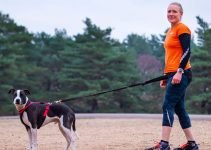 Best Dog Harnesses for Running including 5 Amazing Tips 1