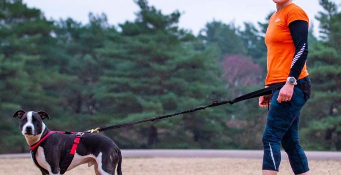 Best Dog Harnesses for Running including 5 Amazing Tips 12