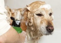 Best Organic Dog Shampoo 2019: Keep Your Dogs Coat Clean 2
