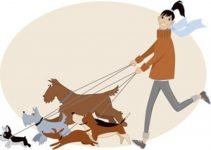Top 10 Tips For Starting A Dog Walking Business