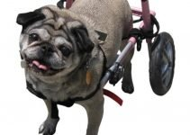 Best Dog Wheelchairs 5 Ways to Solve Mobility Issues 6