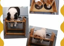 10 Awesome Galvanised Dog Bowl Holders but What Are They? 13