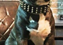The Top 3 Pitbull Collars – Our Favourite Pitbull Dog Collars 14