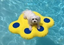 Best 5 Pool Floats for Dogs to Swim and Lounge On In The Pool or Lake 6