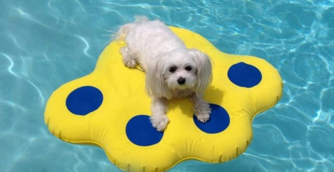 Best 5 Pool Floats for Dogs to Swim and Lounge On In The Pool or Lake