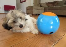 Top 6 Best Treat Dispensing Dog Toys:  Brain Exercise for your Dog