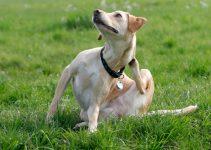 Best Medicated Dog Shampoo Too Help Cure an Itchy Dog