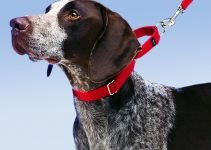 Top 7 Best Martingale Dog Collar