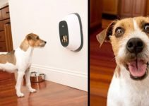 5 Best Affordable Pet Camera Treat Dispenser for Every Dog Owner 2019 2