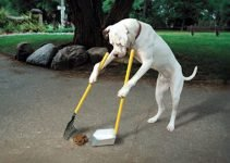 Top 5 Best Long Handled Pooper Scooper – Environmentally Friendly For You and Your Family
