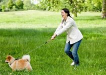Best No Pull Dog Harness: How to Stop Your Dog From Pulling 2019 5