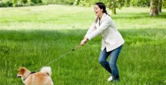Best No Pull Dog Harness: How to Stop Your Dog From Pulling