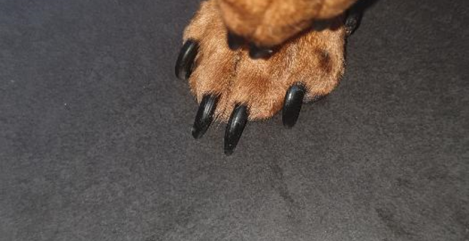How To Trim Dogs Nails That Are Overgrown: Safety Tips