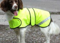 SAFETY: Hi Vis Waterproof Dog Coats Reviews