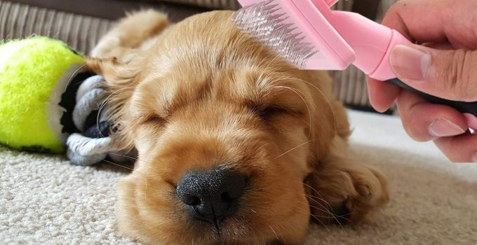 Best Slicker Brushes for Near Perfect Dog Grooming at Home