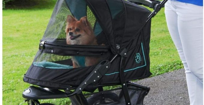 Best Dog Stroller: 5 Reasons Why Dog Owners have turned to Wheels 17
