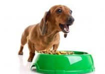 Top 7 Grain Free Dog Food: Food for a Healthier Dog 3
