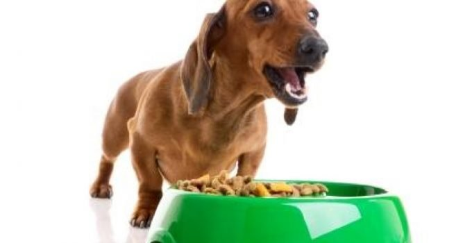 Top 7 Grain Free Dog Food: Food for a Healthier Dog 8