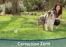 Best Invisible Wireless Dog Fence Buyers Guide