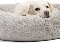 Best 5 Amazing Dog Anxiety Beds: Anxiety Relief Today!