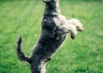 Dog Joint Pains and Arthritis: Look no Further than CBD