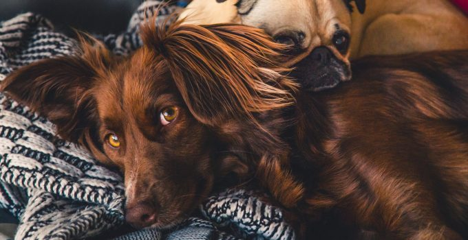7 Ways To Give Your Dog a Healthier Coat