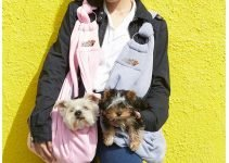 Best Dog Slings for Carrying Your Dog Safely like a Baby