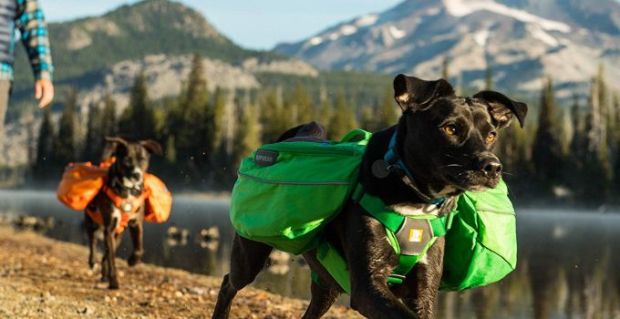 8 Hiking Backpacks for Dogs: Help Dogs Become Great Travel Buddies