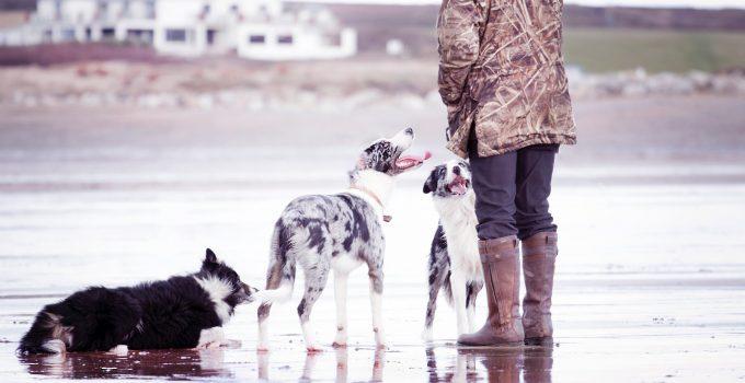 Best 6 Dog Walking Wellies: Choosing Your Perfect Pair