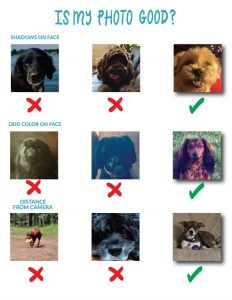 Customisable Socks for Humans: Add your favourite pooch picture