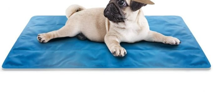 5 Best Dog Cooling Mats - Help your Doggie Beat the Heat