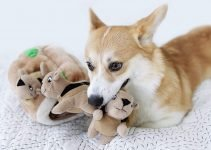 Outdoor Dog Toys: 8 Amazing Toys to Entertain Your Doggie for Hours