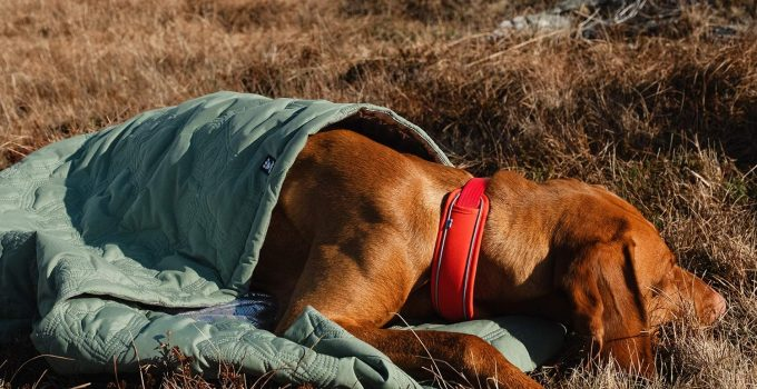 Best Dog Sleeping Bag or Pod for Your Outdoor Adventures