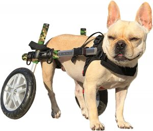 Best Dog Wheelchairs 6 Ways to Solve Mobility Issues