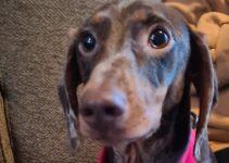 Woofles Super Comfortable Dual AirMesh Dog Harness