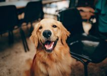 The Essential Thing You Should Know in Dog Training