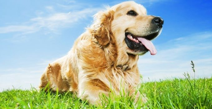 Natural Supplements for Your Dog's Good Health