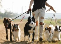 The Freedom Leash for Walking Two Dogs with Freedom