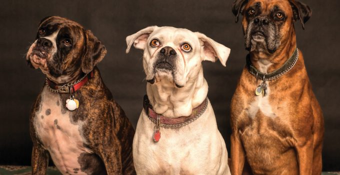 Choose the best dog collar of the apt size for your pet dog