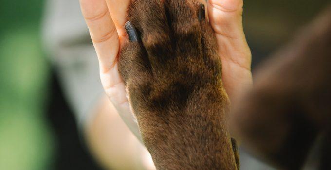 The Benefits of Rawhide Dog Chews